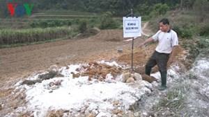 Thêm 1 xã tại Lạng Sơn xuất hiện dịch tả lợn châu Phi