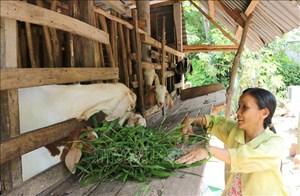 Trà Vinh: Hỗ trợ gần 100 hộ  gia đình chính sách thoát nghèo