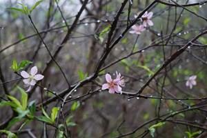 Thời tiết ngày 30 Tết: Đêm giao thừa có mưa xuân