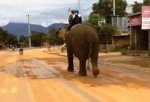 Đắk Lắk đưa con đi học bằng voi như truyền thuyết