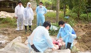 Thừa Thiên - Huế: Hỗ trợ các hộ chăn nuôi có lợn bị tiêu hủy