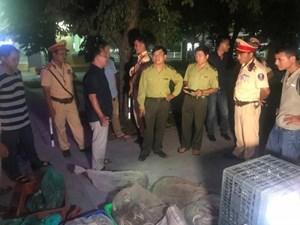 Thừa Thiên - Huế: Phát hiện hàng nghìn con rắn dưới hầm xe khách