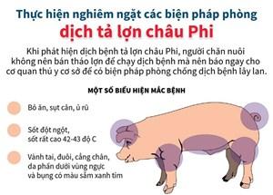 Thực hiện nghiêm ngặt các biện pháp phòng dịch tả lợn châu Phi