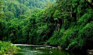 Tích hợp dữ liệu kiểm kê rừng