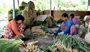 Tiền Giang: Hiệu quả từ những mô hình ở Tân Phú Đông