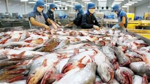 Tìm thị trường cho cá tra