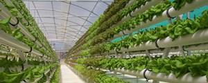 TP HCM nghiên cứu ứng dụng khoa học - công nghệ vào sản xuất nông nghiệp