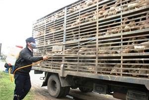 Trên 10 tỷ đồng phòng, chống dịch bệnh gia súc, gia cầm