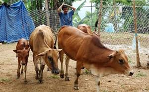 Trên 2,1 triệu hội viên nông dân được vay vốn chính sách