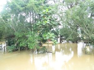 Triển khai công tác ứng phó mưa, lũ ở Quảng Ngãi
