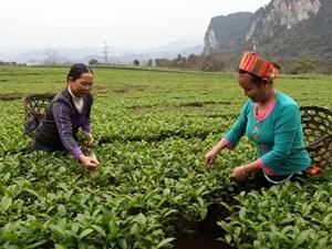 Tuyên Quang xây dựng khu dân cư thực hiện xóa đói giảm nghèo và bảo vệ môi trường