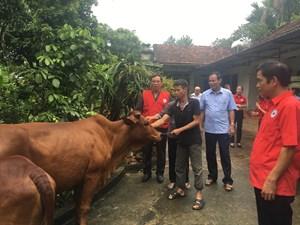 U23 Việt Nam tặng bò giống cho các hộ gia đình có hoàn cảnh khó khăn