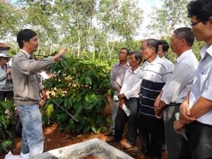 Ứng dụng công nghệ cao phát triển cây cà phê