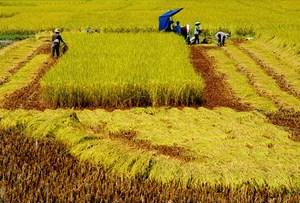Ưu đãi thuế, đất đai: Hút doanh nghiệp đầu tư vào nông nghiệp