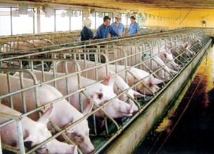 Vận động 100 nghìn hộ chăn nuôi cam kết không dùng chất cấm