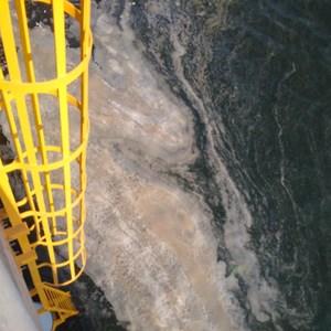 Vệt nước màu nâu đục tại cảng Nghi Sơn nghi do tảo(?)
