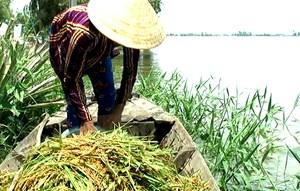 Vỡ đê bao ở Đồng Tháp, hơn 148 ha lúa bị nhấn chìm