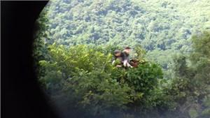 Voọc chà vá chân nâu xuất hiện tại rừng phòng hộ Bắc Hải Vân