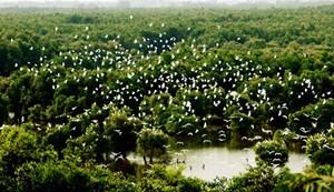 Vườn cò Bằng Lăng  nơi miệt vườn Nam Bộ