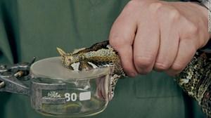 WHO và chiến dịch chặn rắn cắn