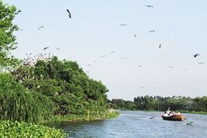 Xây dựng hạ tầng, bảo tồn sinh thái Đảo Cò