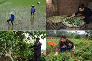 Xây dựng nông thôn mới:  Khai thác thế mạnh của từng địa phương