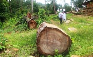 Xử lý nghiêm việc san ủi trái phép đất rừng tự nhiên