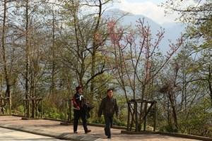 Xuân về  trên đỉnh  Fansipan