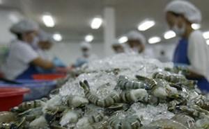 Xuất khẩu tôm sang Hoa Kỳ đạt hơn 176 triệu USD