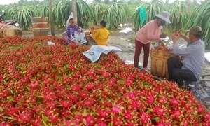 Xuất khẩu trái cây đối diện rào cản