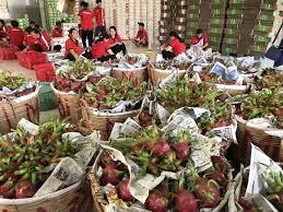 Xuất khẩu trái cây tăng mạnh