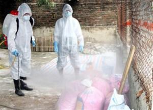 Cảnh giác với cúm AH5N1