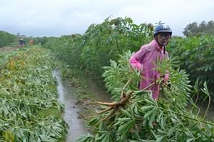 Hơn 859 ha lúa, hoa màu, cây ăn quả bị thiệt hại do bão số 3