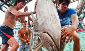 Quảng Nam: Một ngư dân được vay 6,4 tỷ đồng để đóng tàu