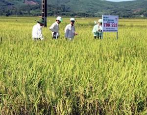 Quảng Ngãi: Trên 29 tỷ đồng bảo vệ và phát triển đất trồng lúa