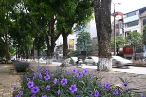 Hà Nội: Kiểm tra toàn bộ cây xanh trong trường học, bệnh viện, công sở