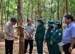 Cao su Việt - Lào hoàn thành xuất sắc nhiệm vụ trên đất bạn