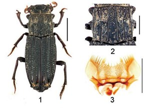 Phát hiện một số loài côn trùng mới tại Việt Nam