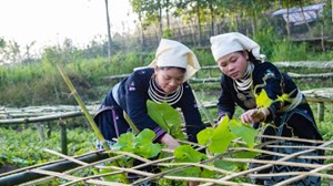Người Tuyên Quang làm nông thôn mới