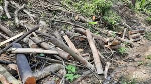 Bắc Sơn (Lạng Sơn): Rừng khe Dông Chính bị chặt phá