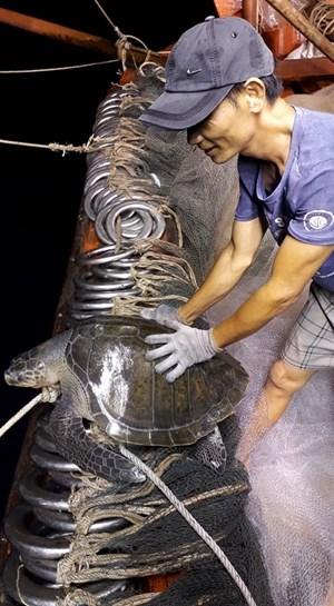 Ngư dân Quảng Nam thả rùa quý hiếm về biển