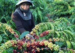 Bà Rịa - Vũng Tàu: Duy trì và phát triển các loại cây trồng chủ lực