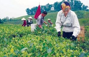 Xây dựng nông thôn mới ở Thái Nguyên: Dân chủ, công khai, minh bạch