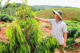 Hạn hán gay gắt: Chuyển đổi cơ cấu cây trồng