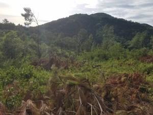 Rừng phòng hộ bị phá tan hoang