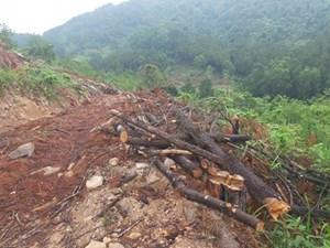 Công an vào cuộc vụ rừng phòng hộ bị chặt phá