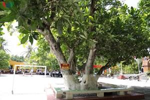 Trao Bằng công nhận 4 cây di sản ở Quần đảo Trường Sa