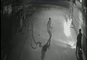 [VIDEO] Trộm chó bất thành, bỏ chạy khi bị nữ chủ nhà phát hiện