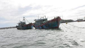 Xử phạt 2 tàu dã cào ở Quảng Ngãi đánh bắt sai tuyến