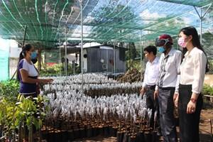 Hậu Giang: Liên kết để phát triển nông nghiệp đô thị